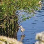 Heron River Stour Tuckton