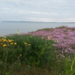 Wild Flowers Southbourne